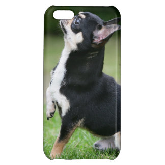 Black and Cream Chihuahua iPhone 5C Case