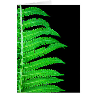 Black and Green Fern Note Card