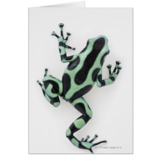 Black and Green Poison Dart Frog 2 Card