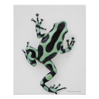 Black and Green Poison Dart Frog 2 Posters