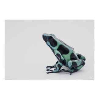 Black and Green Poison Dart Frog 2 Print