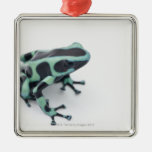 black and green poison dart frog (dendrobates ornament