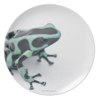 black and green poison dart frog (dendrobates dinner plate