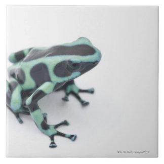 black and green poison dart frog (dendrobates large square tile