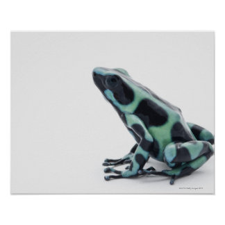 Black and Green Poison Dart Frog Posters