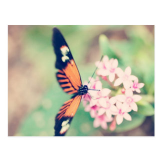 black and orange butterfly on a pink flower postcard