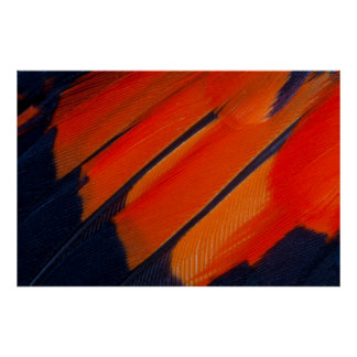 Black And Orange Feather Abstract Poster