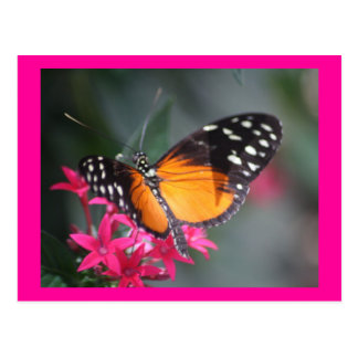 Black and Orange Spotted Butterfly 2 Postcard