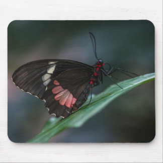 BLACK AND PINK BUTTERFLY by Michelle Diehl Mouse Pad
