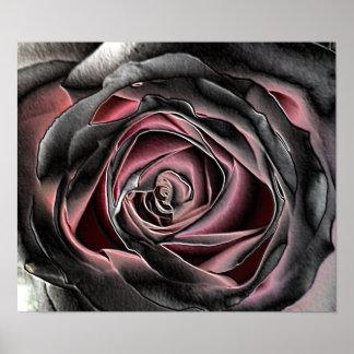 Black and Pink Rose Print
