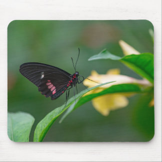 BLACK AND RED BUTTERFLY by Michelle Diehl Mousepad