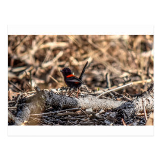 BLACK AND RED FINCH AUSTRALIA WITH ART EFFECTS POSTCARD
