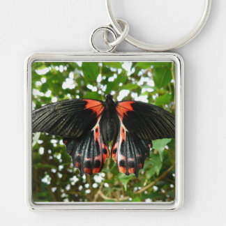 Black and red moth keychains