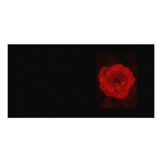 Black and Red Rose. Custom Photo Card
