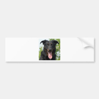black and tan Beauceron.png Bumper Sticker