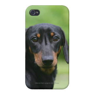 Black and Tan Miniture Dachshund 1 iPhone 4/4S Cases
