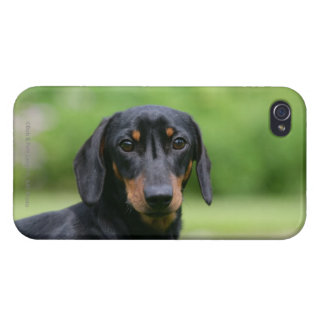 Black and Tan Miniture Dachshund 1 iPhone 4/4S Covers