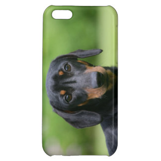 Black and Tan Miniture Dachshund 1 iPhone 5C Cases