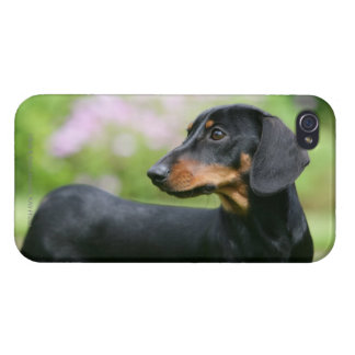 Black and Tan Miniture Dachshund 2 Case For iPhone 4