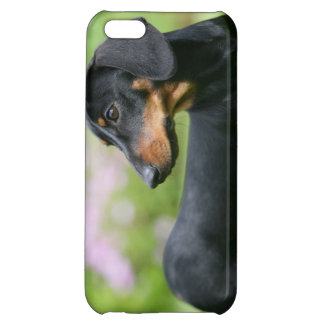 Black and Tan Miniture Dachshund 2 Case For iPhone 5C