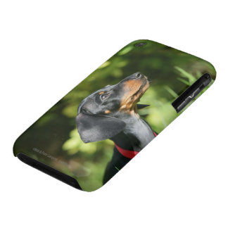 Black and Tan Miniture Dachshund 3 iPhone 3 Case-Mate Cases