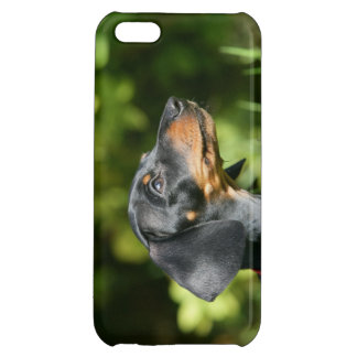 Black and Tan Miniture Dachshund 3 iPhone 5C Cover