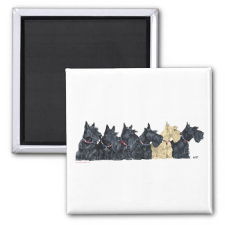 Black and Wheaten Scottish Terriers Square Magnet