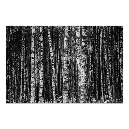 Black and White Abstract Birch Forest Poster