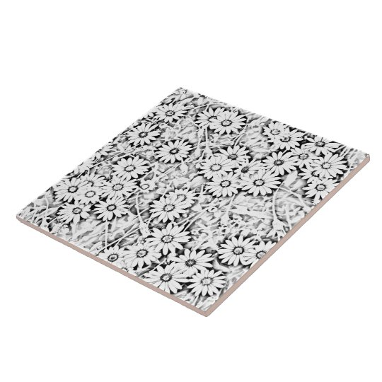 Black and White African Daisies Large Square Tile
