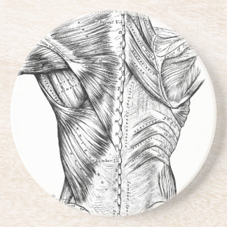 Black and White Anatomy Art Back Muscles (1890) Coaster