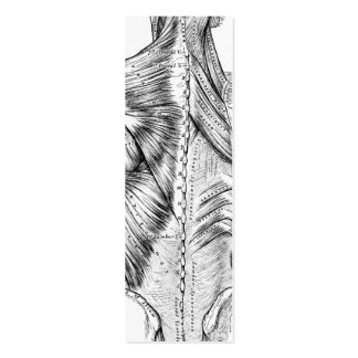 Black and White Anatomy Art Back Muscles (1890) Pack Of Skinny Business Cards