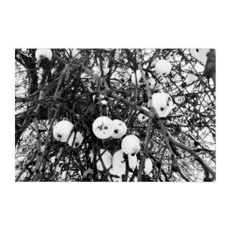 Black and white autumn acrylic wall art