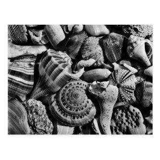 Black and White Beach Shells Postcard
