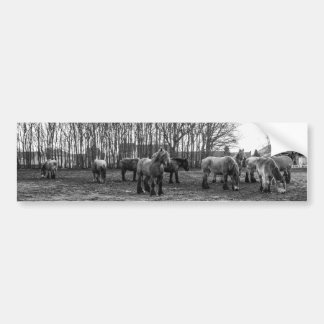 Black and White Belgian Horses In A Pasture Bumper Stickers