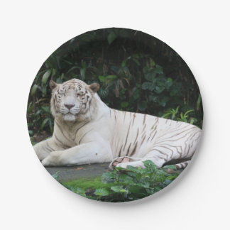 Black and White Bengal Tiger relaxed and smiling Paper Plate