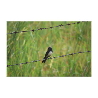 BLACK AND WHITE BIRD RURAL ON FENCE AUSTRALIA STRETCHED CANVAS PRINT