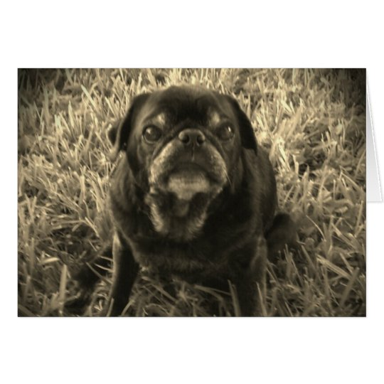 black and white Black Pug greeting card