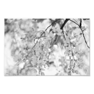 Black and White Blossom Branch Photo Print