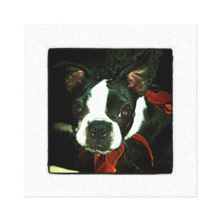 Black and White Boston Terrier Gallery Wrapped Canvas