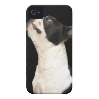 Black and white Boston Terrier looking up Case-Mate iPhone 4 Cases