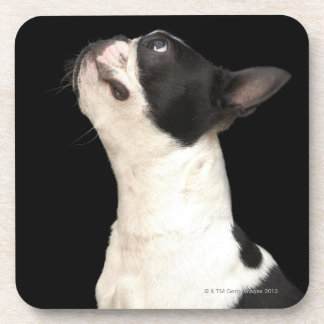 Black and white Boston Terrier looking up Drink Coaster