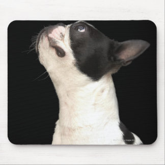 Black and white Boston Terrier looking up Mouse Pad