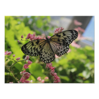 Black And White Butterfly On Pink Flower Poster