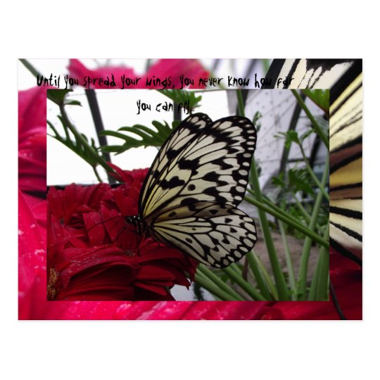 Black and white butterfly postcard