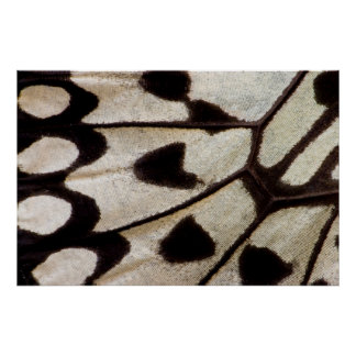 Black and white butterfly wing poster