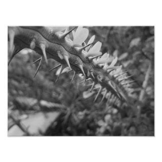 Black And White Cactus Photo Poster