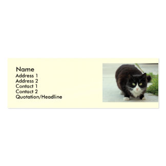 Black and white cat pack of skinny business cards