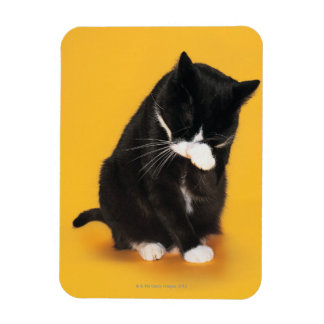 Black and White Cat cleaning face with paw Rectangular Photo Magnet