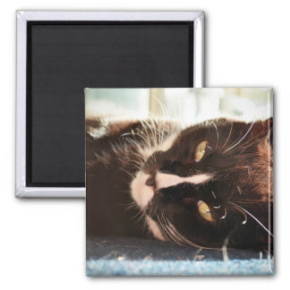 black and white cat face animal photo yellow eyes refrigerator magnets