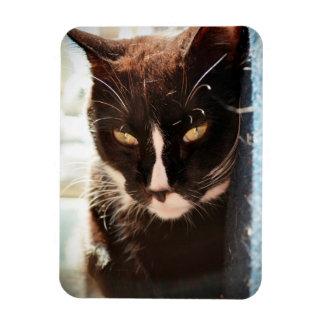 black and white cat face animal photo yellow eyes rectangular magnet